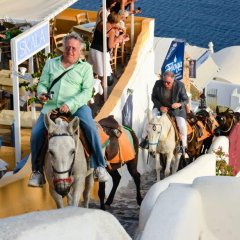 Santorini Bans Obese Tourists From Donkey Rides