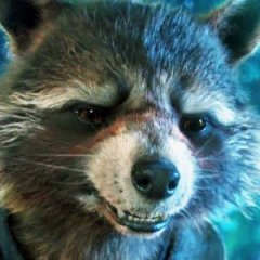 Real Life Rocket Raccoon From Guardians of the Galaxy Has Died