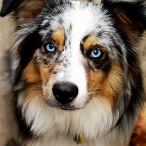 List Of Longest Living Dog Breeds