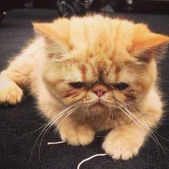 Justin Bieber's Cat Joins Twitter And Noone Cares