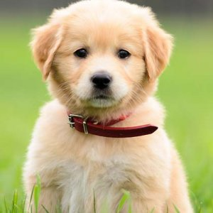 The Most Popular Dog Names of 2017