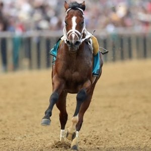 A Riderless Horse Stole the Show at Preakness Stakes